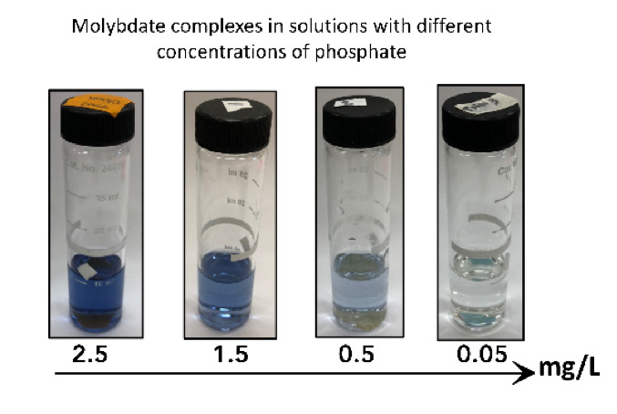 molybdate complexes in solutions with different concentrations of phosphate